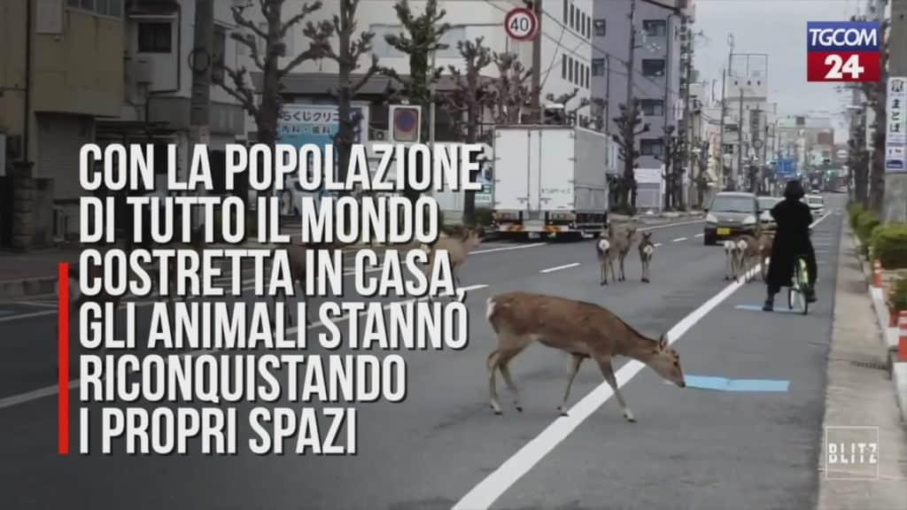 animali in città coronavirus